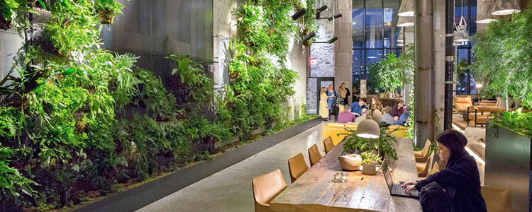 Biophilic Workspace Design.jpg